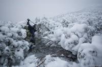 Шурик убивает елку