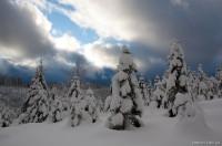 Панорамный лес
